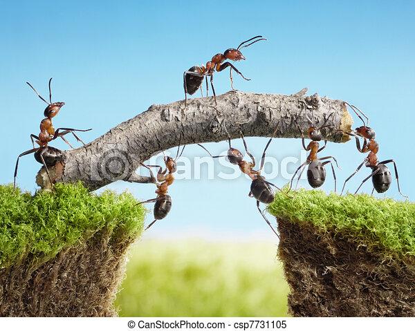 ponte, trabalho equipe, construir, formigas, equipe - csp7731105