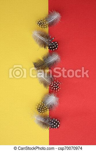 pontilhado, ave, guiné, seis, penas, amarela, vermelho - csp70070974