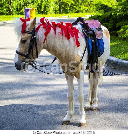 pony - csp34542215