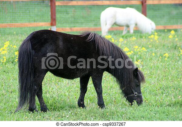pony - csp9337267