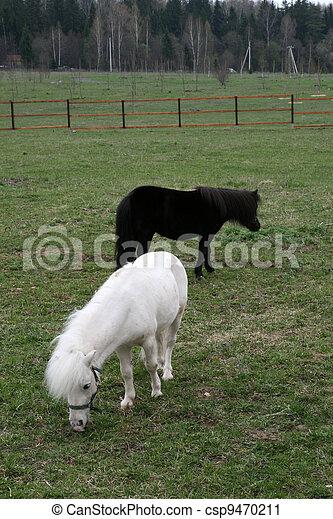 Pony - csp9470211