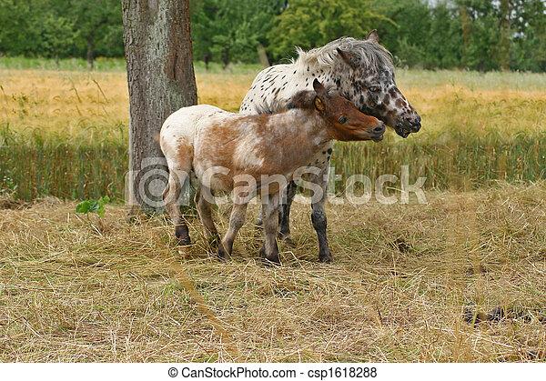 pony - csp1618288