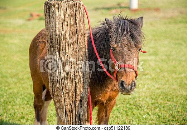 Pony - csp51122189