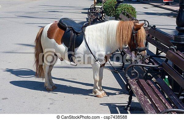 pony - csp7438588