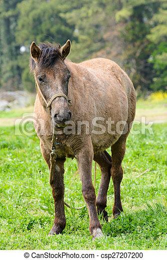 Pony auf einem grünen Feld - csp27207200
