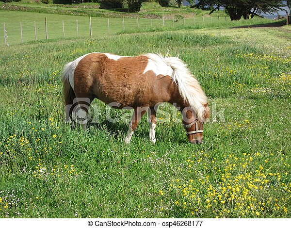 Pony in a meadow - csp46268177