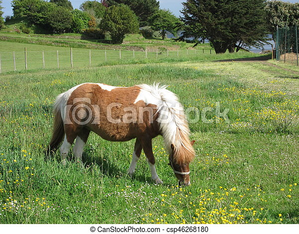Pony in a meadow - csp46268180