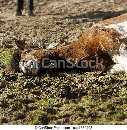 pony, insel - csp1662403