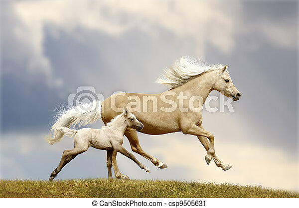 pony mare and foal - csp9505631