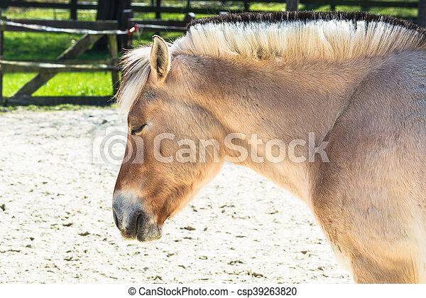 pony, paddock. - csp39263820