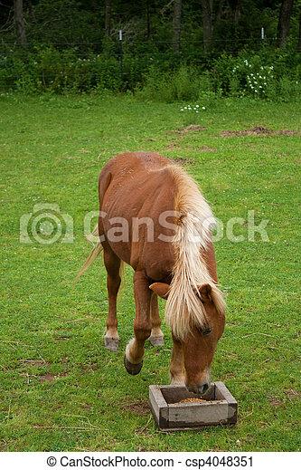 pony, rotes  - csp4048351