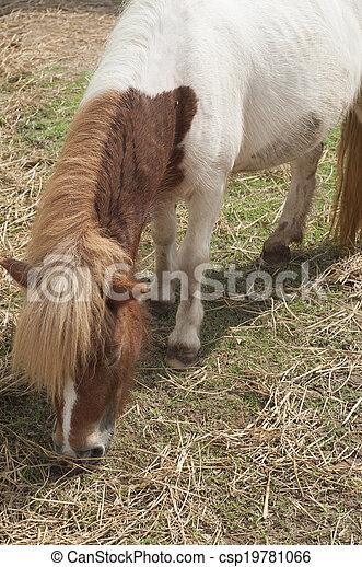 pony. - csp19781066