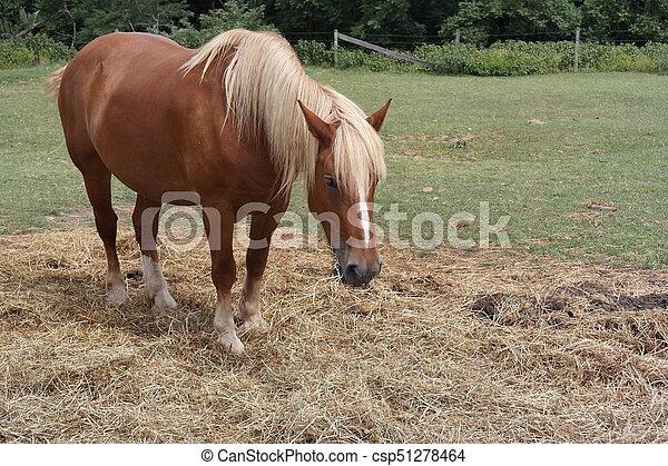 Pony - csp51278464