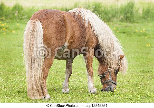pony - csp12845854