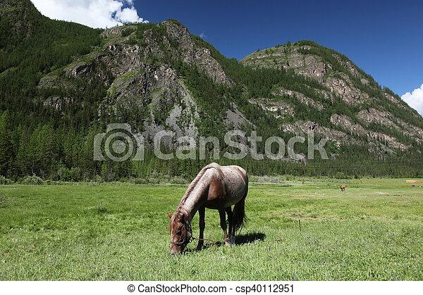 pony - csp40112951