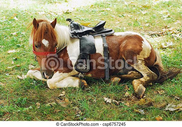 pony - csp6757245