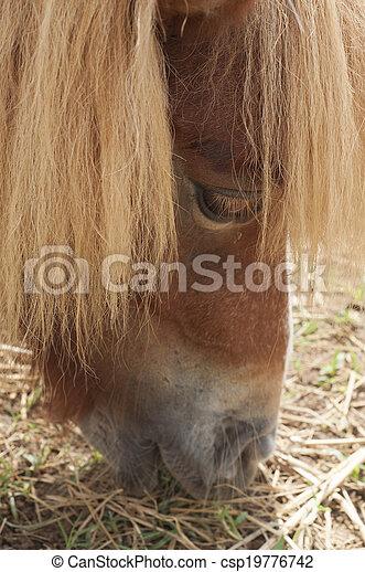 Pony. - csp19776742