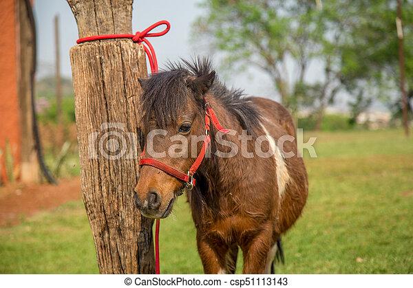 pony - csp51113143