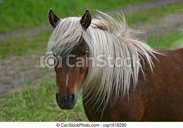 pony - csp1618290