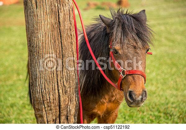 pony - csp51122192