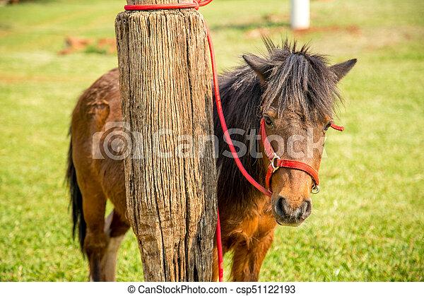 Pony - csp51122193