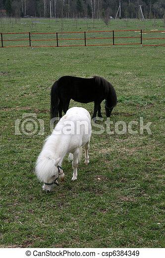 pony - csp6384349