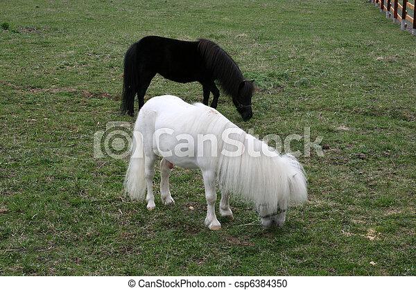 Pony - csp6384350