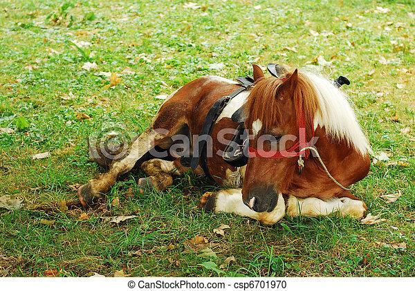 pony - csp6701970