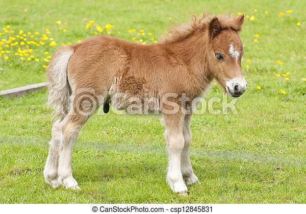 pony - csp12845831