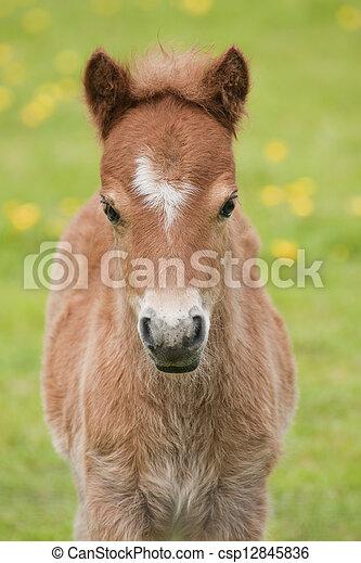 pony - csp12845836