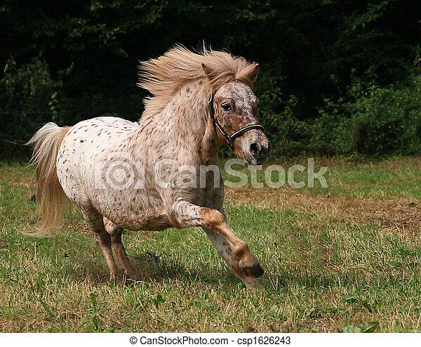 Pony - csp1626243