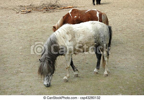 Pony - csp43280132