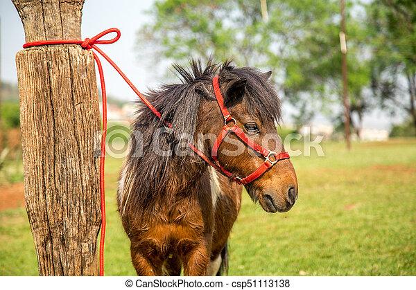 pony - csp51113138