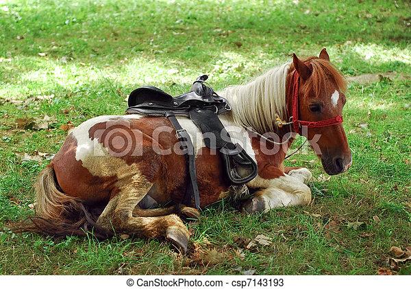 Pony - csp7143193