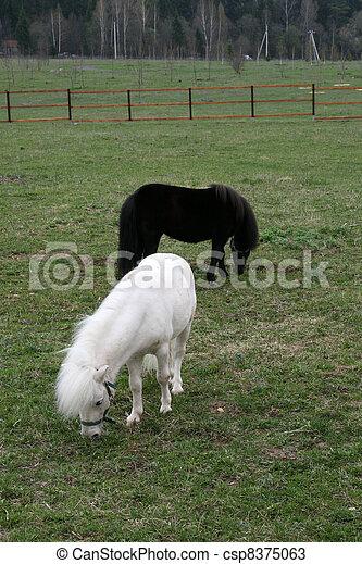 Pony - csp8375063