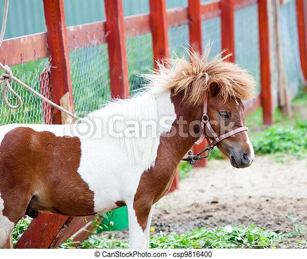 pony, weiß rot, spotty, klein - csp9816400