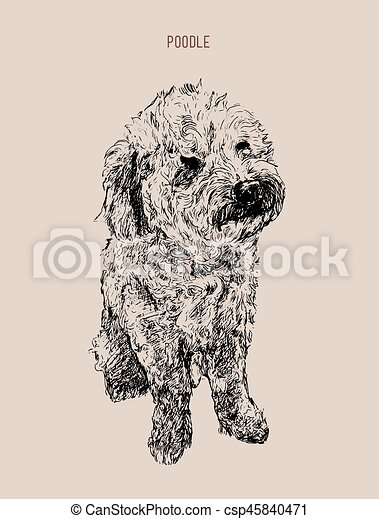 Poodle Dog Vector Illustration Hand Drawn Dog Sketch