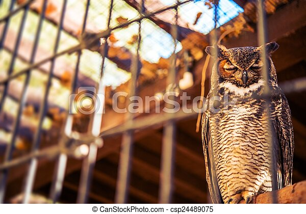 Poor Owl in Captivity - csp24489075
