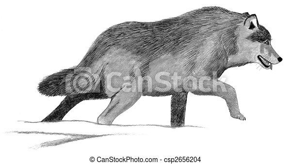 Popelavy Vlk Sedivy Lupus Kreslit Pocitac Hltat Canis