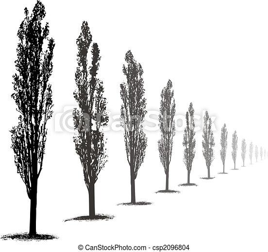 Poplars  Trees - csp2096804