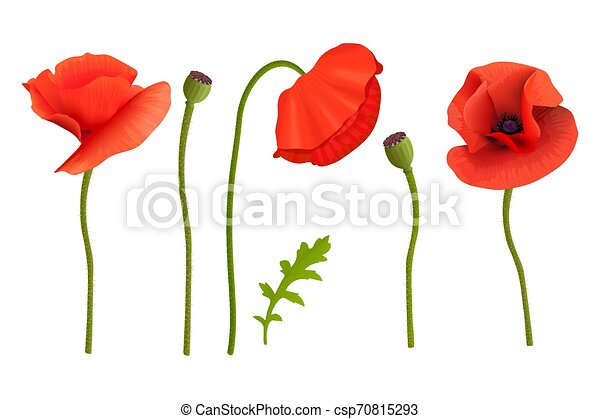 Poppies Flowers And Stems Wallpaper Picture Remembrance Day For Aromatherapy Wrapping Postcards Packaging Cards
