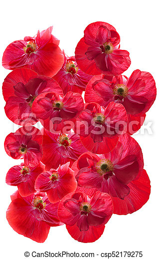 Poppies for remembrance day a group of poppy flowers picture poppies for remembrance day csp52179275 mightylinksfo