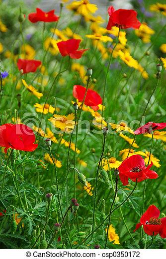 Poppies in a garden - csp0350172