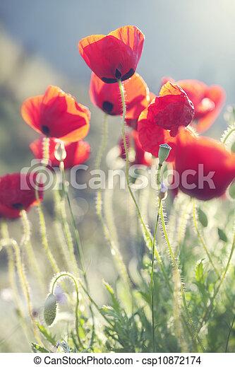 poppies - csp10872174