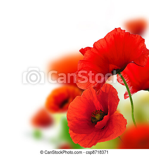 poppies white background, green and red floral design, frame - csp8718371