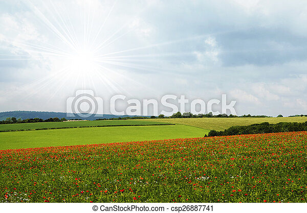 Poppy field - csp26887741