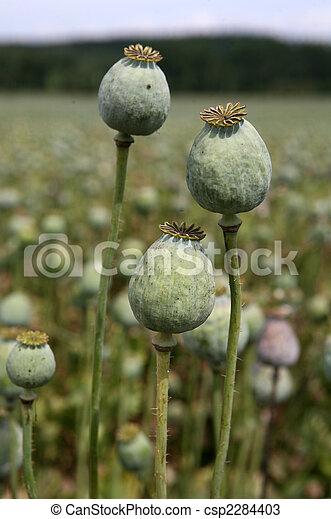 Poppy field - csp2284403