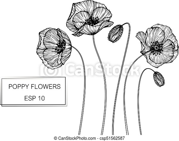 Poppy Flower Drawing And Sketch With Black And White Line Art