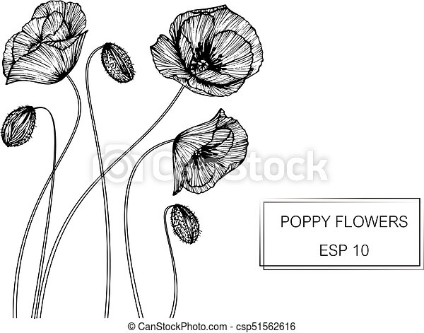 Poppy flower drawing and sketch with black and white line art mightylinksfo