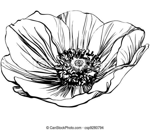 A black and white picture poppy flower eps vector search clip art poppy flower csp9280794 mightylinksfo Image collections